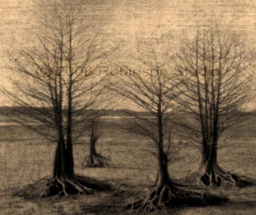 tree-landscape-10.jpg